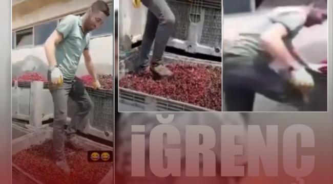 Meyve suyu üretim tesisinde mide bulandıran görüntüler